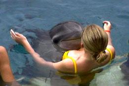 DolphinKiss_small2