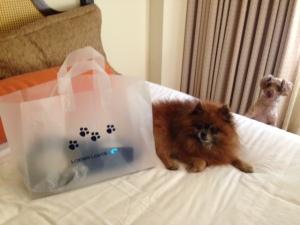 Doggie Goody Bag