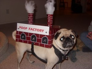 Poop Factory - Awww! I don't think he's happy about this title.