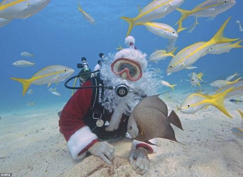 The Writer Next Door-Vashti Q-Christmas-Florida