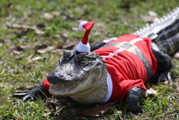 Merry Christmas from Florida!