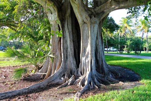 Tree_Miami