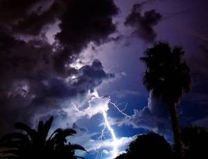 the cursed tree_lightning storm_Vashti Quiroz-Vega's Blog