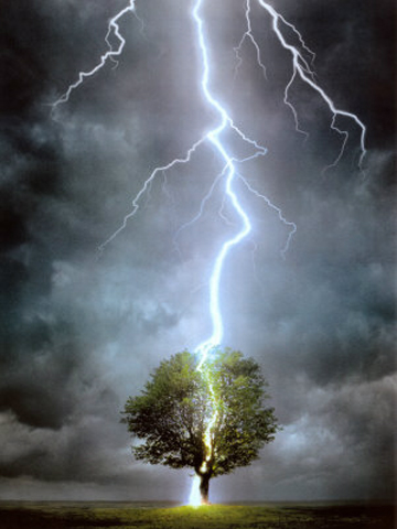 Tree-Lightning-the cursed tree