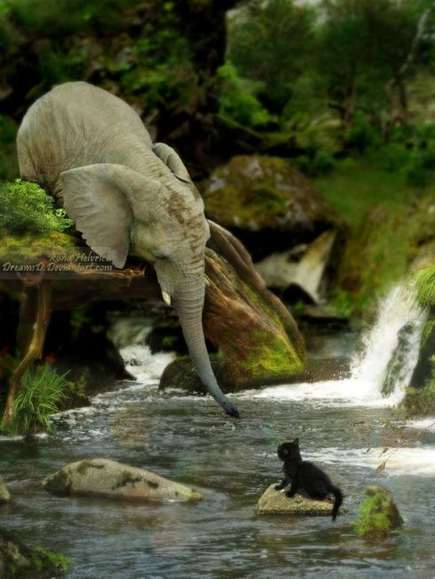 True compassion: Elephants are among the most emotional creatures in the world. They have been known to rescue other animals.