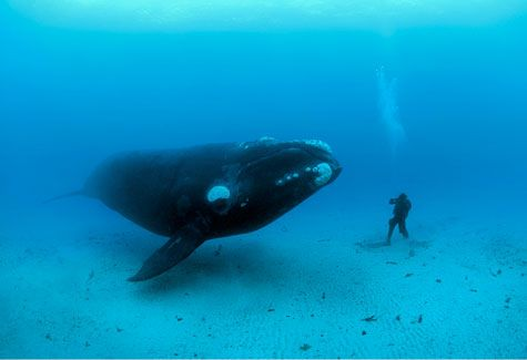Whale by Brian Skerry (Photograph)