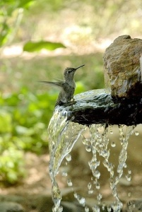 thirsty little humming bird