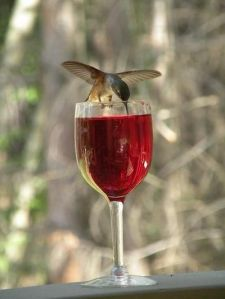 no drinking and flying