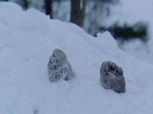 moscow dead body snow-78787