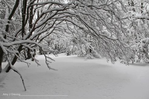 fresh snow_haiku_vashtiquiroz-vega