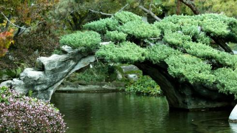 japanese_garden_Haiku_Poetry