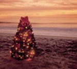 tREE_ON_bEACH_2