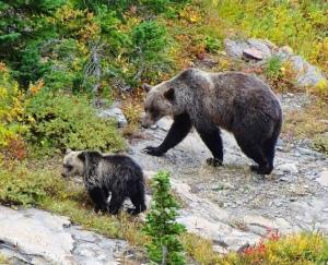 The Writer Next Door-photograph-bears-Cindy Knoke