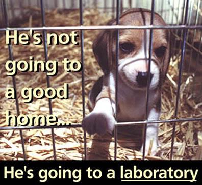 animal cruelty-animal testing-The Writer Next Door-PETA-Poetry-Haiku_Friday