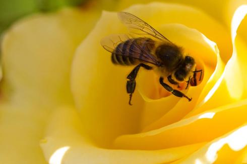 dina calvarese-bee-The Writer Next Door-Vashti Q-Poetry-haiku