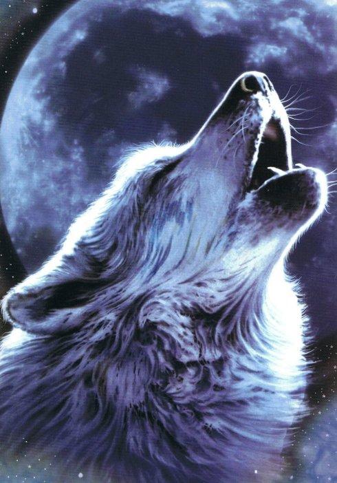 Haiku_Friday-The Writer Next Door-Vashti Q-Poetry-haiku-wolf