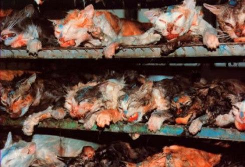 animal cruelty-VashtiQ-animal_testing-Haiku_friday-The Writer Next Door-haiku