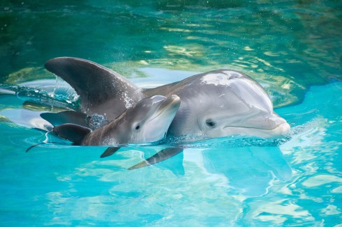 dolphins-National Endangered Species Day-The Writer Next Door-Vashti Q-Poetry-haiku-Friday