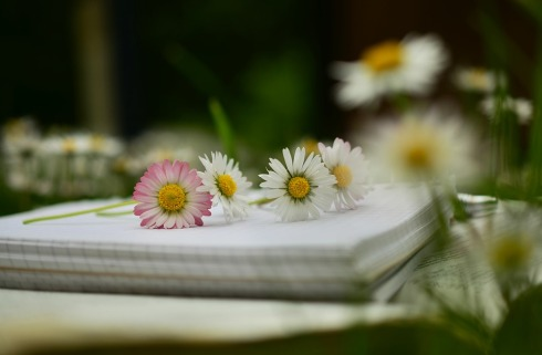 notebook-Poetry-The Writer Next Door-Vashti Q-blank_pages-Haiku_Friday-Vashti Quiroz Vega
