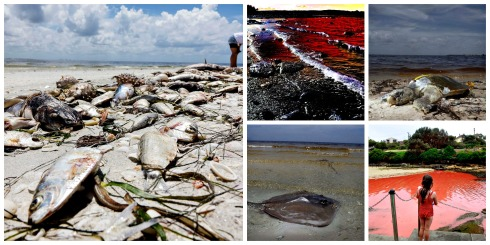 red tide-toxic_algae-Florida-Poetry_Friday-Vashti Q-The Writer Next Door-Vashti Quiroz Vega-marine_life