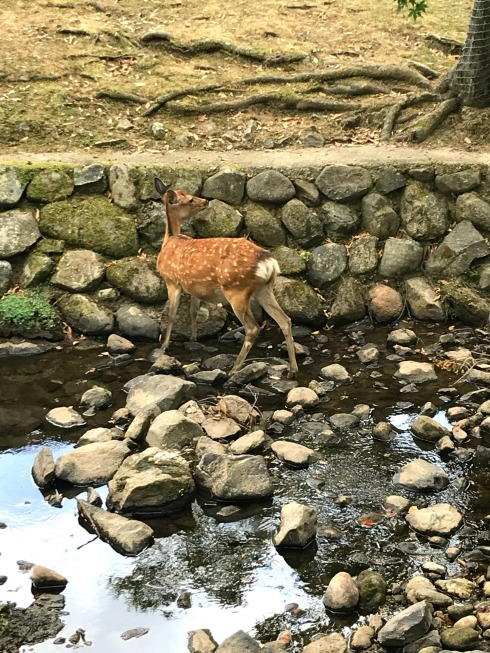 Bambi-Poetry_Friday-Nara Nara-Japan-Micropoetry-Tanka_Tuesday-Vashti Quiroz Vega