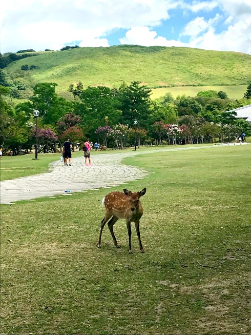deer-Nara_Japan-Nara Park-Poetry_Friday-Vashti Quiroz Vega-Vashti Q-The Writer Next Door-vacay-Bambi-Tanka_Tuesday