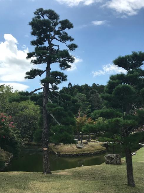 Japanese_Park-Nara-Japan-deers-Poetry_Friday-Vashti Quiroz Vega-Vashti Q-Tanka
