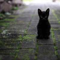 Poetry Friday ~ Little Black Kitty